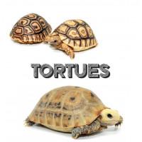 Vente tortues terrestres et aquatiques - Bebesaurus animalerie à Lyon