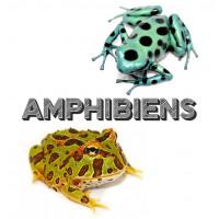 Amphibiens (grenouilles, salamandres, crapauds ) à Lyon