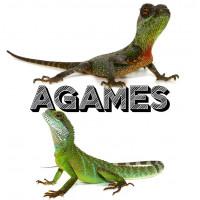 Agames - Bebesaurus, spécialiste reptiles à Lyon