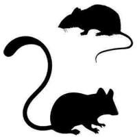 Rongeurs (souris, rats) et poussins congelés