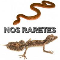 Reptiles rares à Lyon
