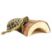 Matériel pour tortues terrestres - Bebesaurus